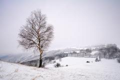 Zimný pustovník