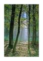v magickom lesíku..