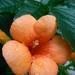 Kvet po dazdi