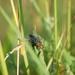 Bzzzučiak v trave
