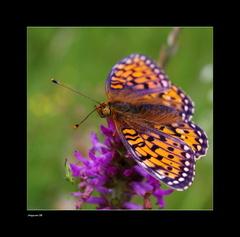 Na krídlach motýla...