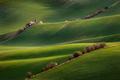 Strážca zelených polí