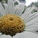 content flower.