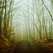 stiavnicky les