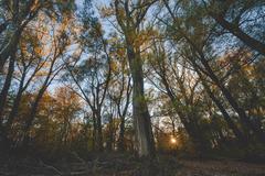 pečniansky les