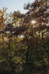jeseň na Kopáčskom ostrove