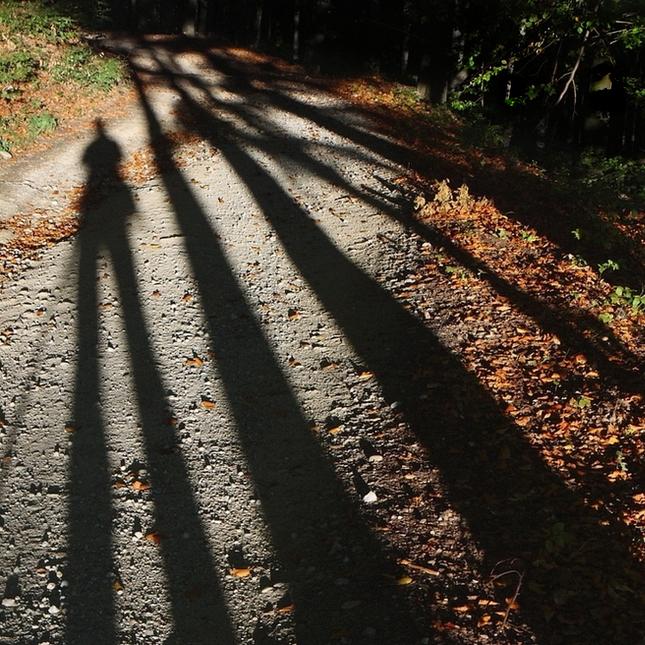 súčasťou lesa
