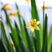 Privítanie jari