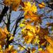 Rozlúčka s jeseňou