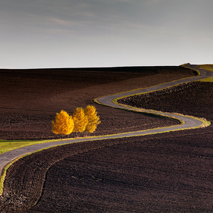 Jesenné pole