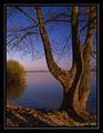 strom pri Lipt. Mare