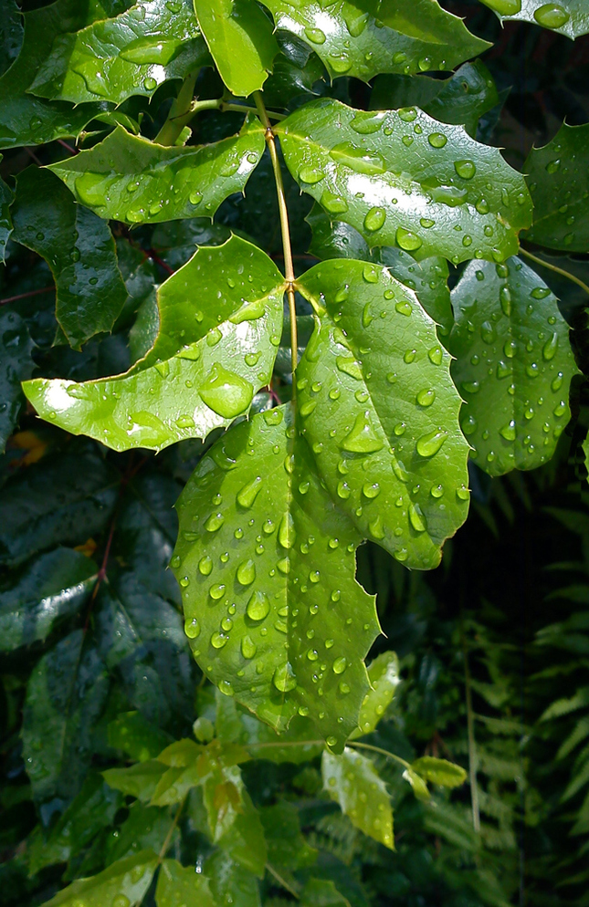 Po daždi ...