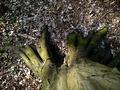 """""""prsty"""" do zeme zaborené ..."""