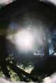 V žiari svetla