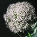 Aj to je kvet