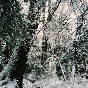 zacina zima