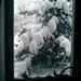 Zima v okne