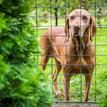 Pes od susedov