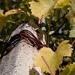 Jesen vo vinohrade