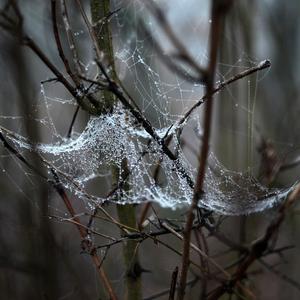 Aj pavúky prezimujú
