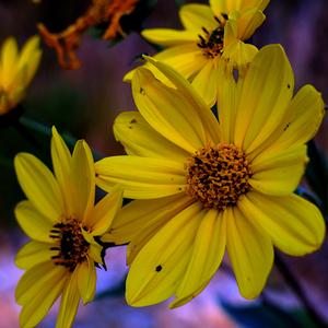 Kvetinový háj