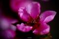 jednoducho Kvetinka