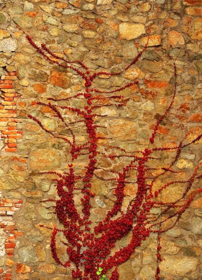 Mozaika.