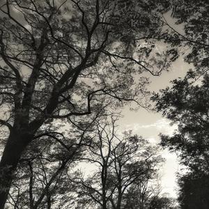 Koruny stromov.