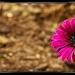 kvetinkova....
