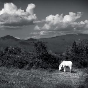 Macedónsky  vidiek