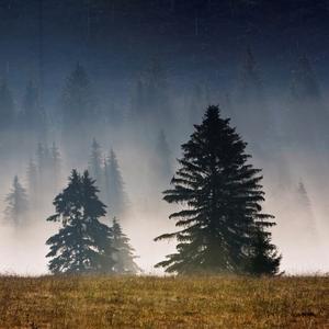 Utopený les
