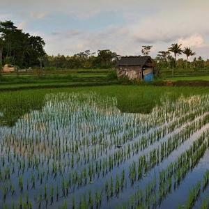 Obrázky z Bali IIII.