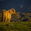 Slncový kôň
