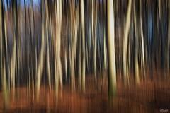 Beh silvestrovským lesom II