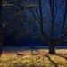 Fany v magickom lese