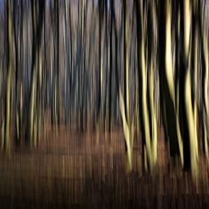Beh silvestrovským lesom