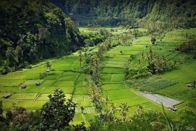 Obrázky z Bali III.