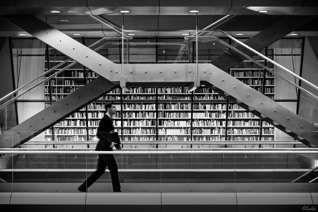 Čiernobiely knihomoľ