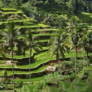 Obrázky z Bali II.