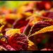 Farby jesene II