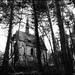 hrobka na kraji lesa