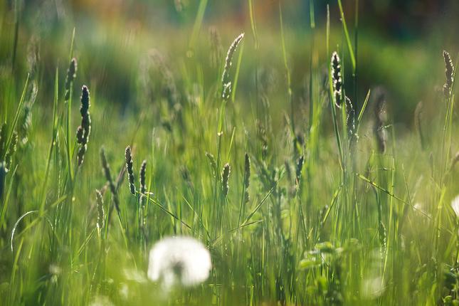 v tráve..