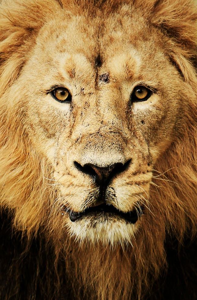 Pohled krále