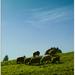 A grazing land