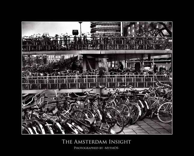 The Amsterdam Insight