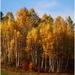 Jesenné brezy