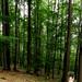 Lesom bosá