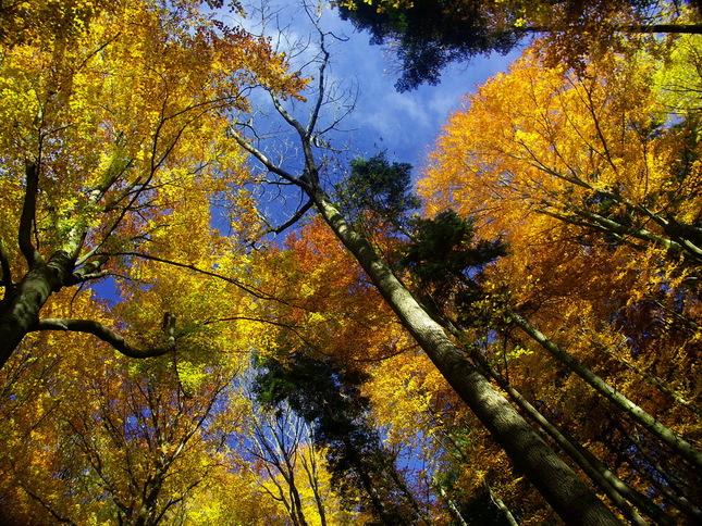 kvitnuce stromy
