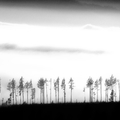 Krajina / Landscape (B & W)
