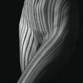 krivky